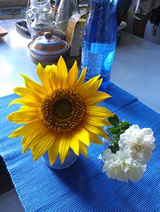dayflowers-WP_b002920